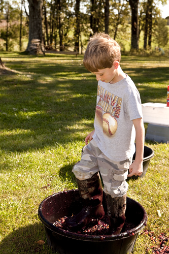 Boy stomps grapes at the Black Oak Vineyard wine festival near Lake Barkley, Kentucky.