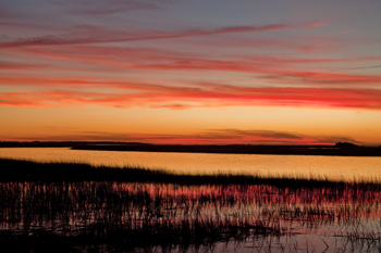 Salt marsh, Hunting Island, South Carolina
