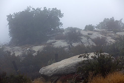 Fog blankets Sacred Rocks Reserve. Photo credit - David Muenker
