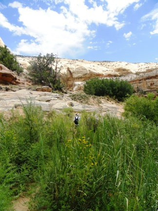 Calf Creek Trail riparian vegetation